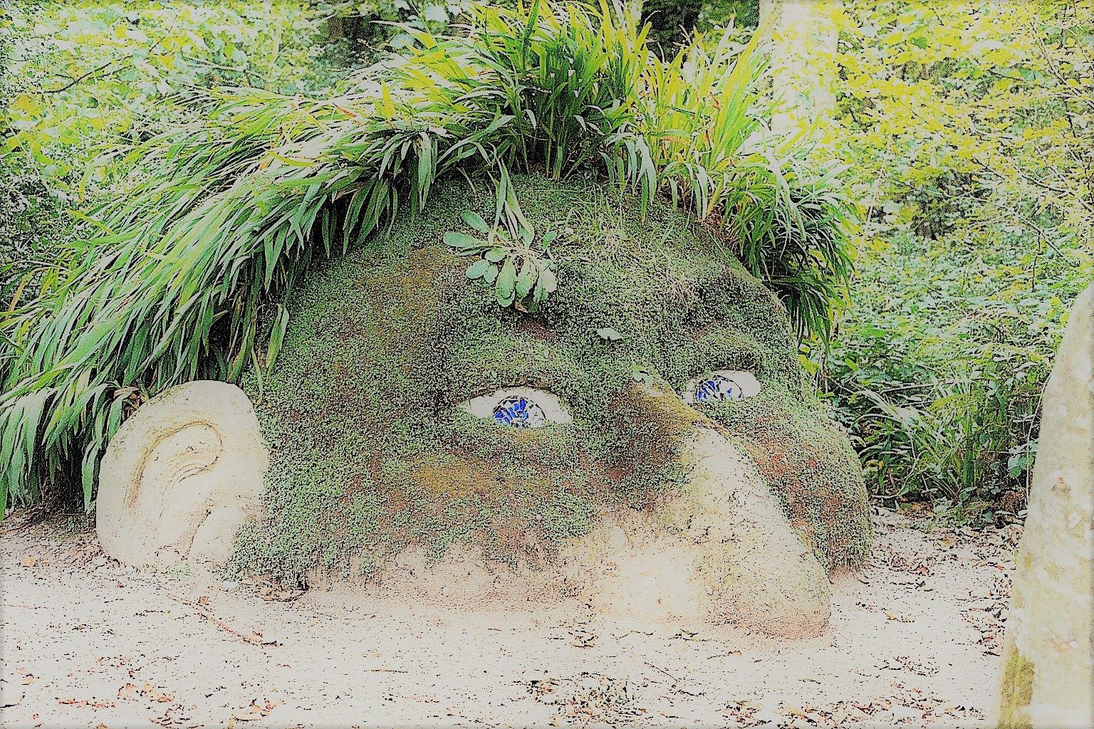 The Giant's Head at Lost Gardens of Heligan Cornwall
